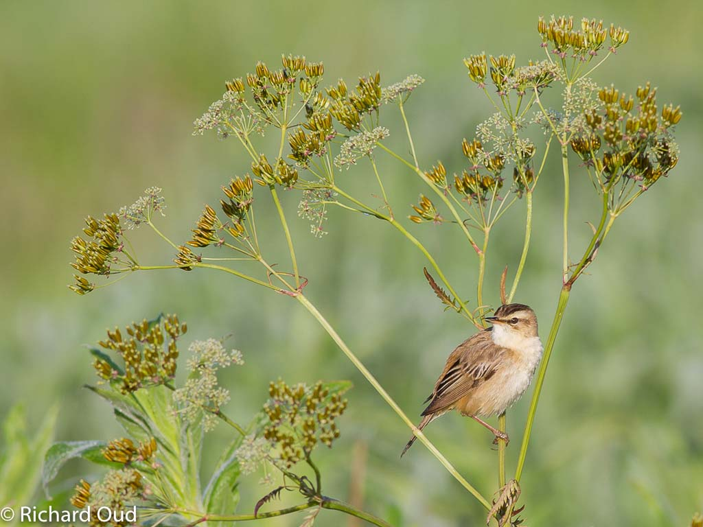 Gebieden fotograferen Natuurfotografie.nl:Waverhoek