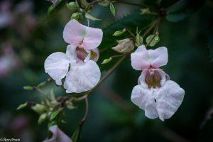 Om twee bloemen scherpt te krijgen moet je ze goed in een vlak houden. - Fotograaf: Ron Poot