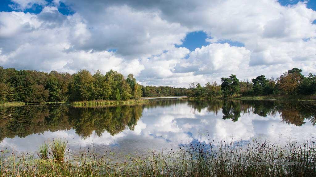 Gebieden fotograferen Natuurfotografie.nl:Het Leersumse Veld