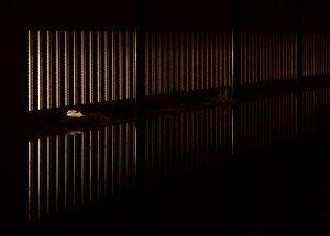 Nestfotografie bij nacht.  - Fotograaf: Arno ten Hoeve