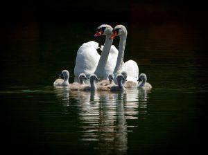 Gelukkig gezinnetje.  - Fotograaf: Arno ten Hoeve