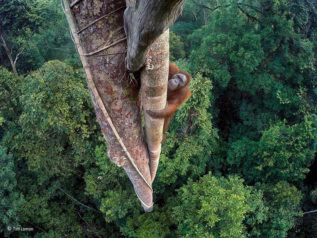 Uitslag Wildlife Photographer of the Year