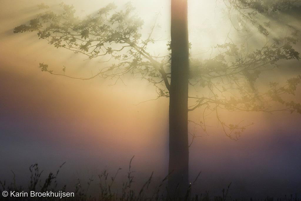Door irisatie in de mist zien we een regenboog.