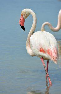 Pink Lady - Fotograaf: Hennie Zeij