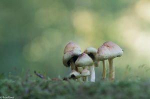 Groepje van opzij tegen de zachte kleuren van het bos op de achtergrond. - Fotograaf: Ron Poot