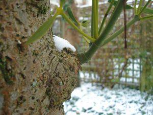 Mijn vrouw in de winter van 2010. - Fotograaf: Arno van Berge Henegouwen
