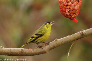 vogels in je tuin