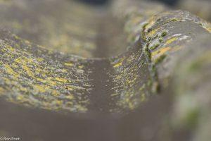 Mossen en korstmossen op een dakpan, maak gebruik van de golvende patronen.  - Fotograaf: Ron Poot