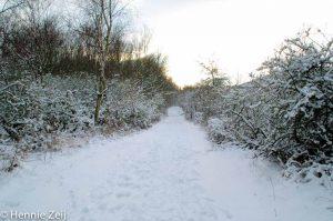 Winterpracht. - Fotograaf: Hennie Zeij
