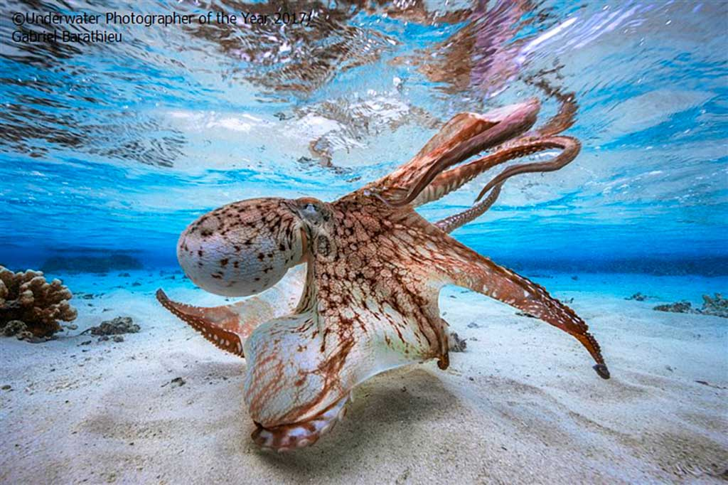 Winnaars Underwater Photographer of the Year 2017