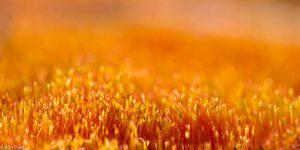Massaal op kale zandgrond, scherp van voren en de achtergrond lekker laten vervloeien.  - Fotograaf: Ron Poot