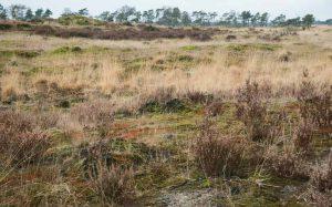 Ruig haarmos vormt duidelijke grote rode vlekken in het landschap.  - Fotograaf: Anita  Bosker