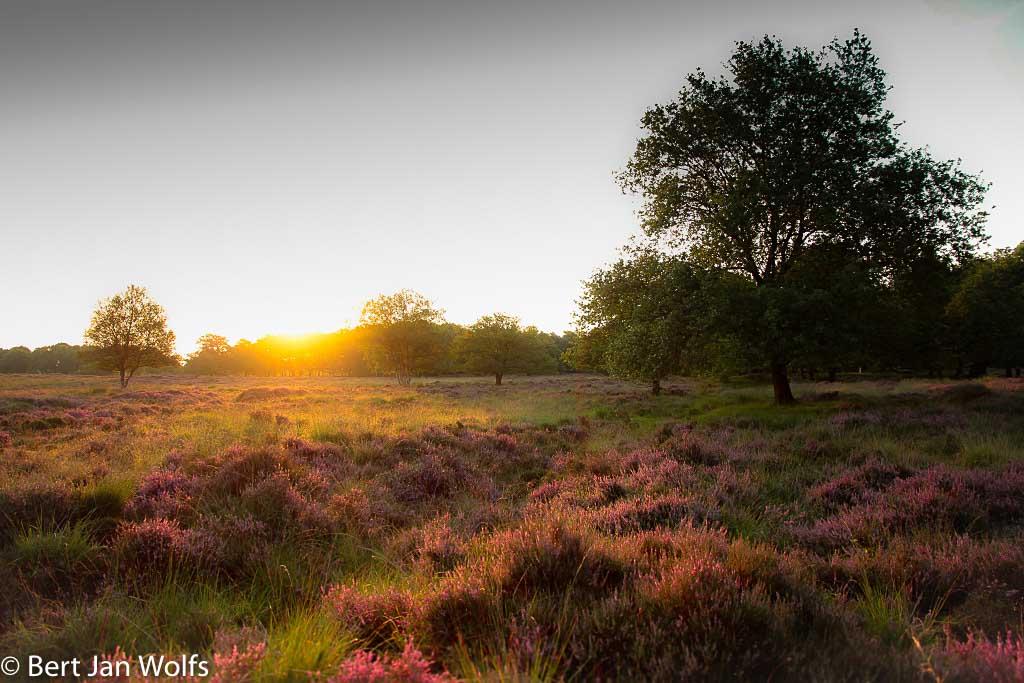 Gebieden fotograferen Natuurfotografie.nl:Balloërveld