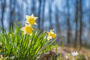 Bob_Luijks-lenteweer