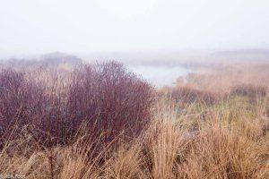 Gagel in de winter zorgt voor rode tinten in het landschap. - Fotograaf: Ron Poot