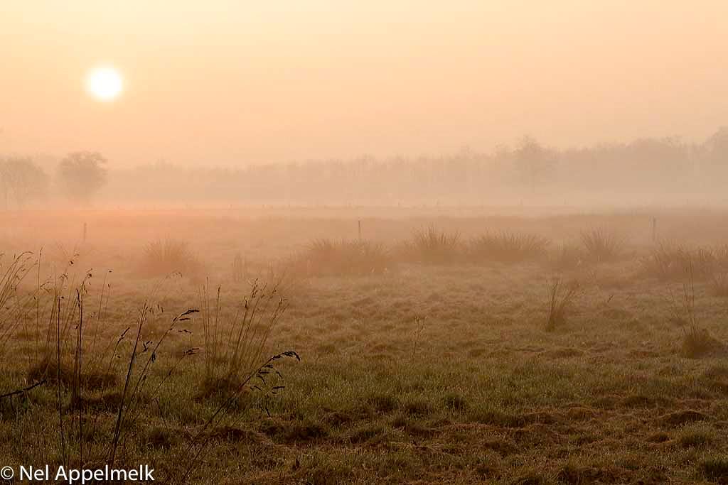 Gebieden fotograferen Natuurfotografie.nl:Tongerense hei en het Wisselse veen