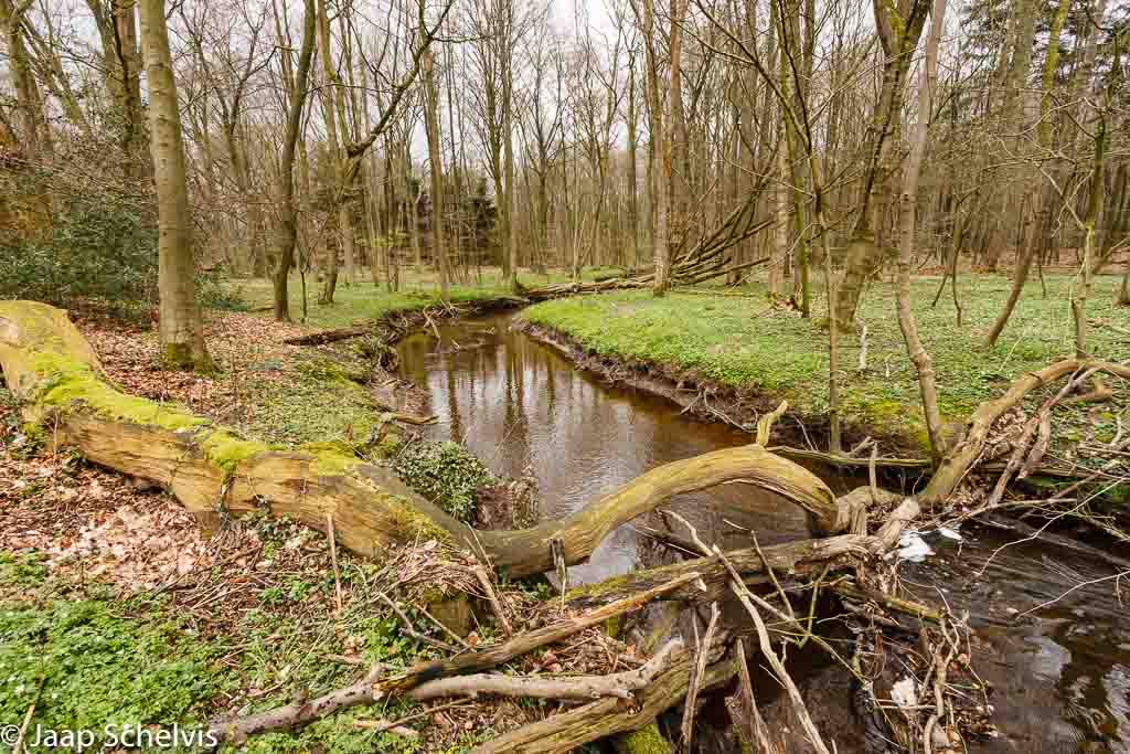 Gebieden fotograferen Natuurfotografie.nl:Hasbruch