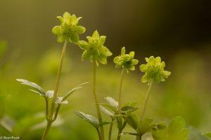 Vier bloempjes in een vlak.  - Fotograaf: Ron Poot