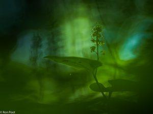 Door de vegetatie heen fotograferen kan een heel eigen sfeer oproepen.  - Fotograaf: Ron Poot