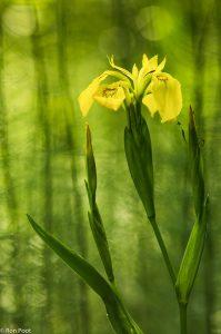 Maak gebruik van het licht en de patronen van de vegetatie in de achtergrond. - Fotograaf: Ron Poot
