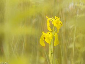 Door de vegetatie heen fotograferen geeft een dromerige sfeer. - Fotograaf: Ron Poot