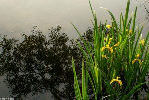 Contrasten zoeken, hier met de spiegelingen in het water. - Fotograaf: Ron Poot