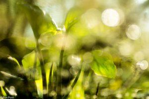 Een creatieve benadering: De spiegeling van slangenwortelblad in het glinsterende water. Foto bewerkt en verticaal gespiegeld. - Fotograaf: Ron Poot