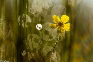 Spelen met tegenlicht: de schaduw van de omringende vegetatie zie je terug in het bokeh. - Fotograaf: Ron Poot