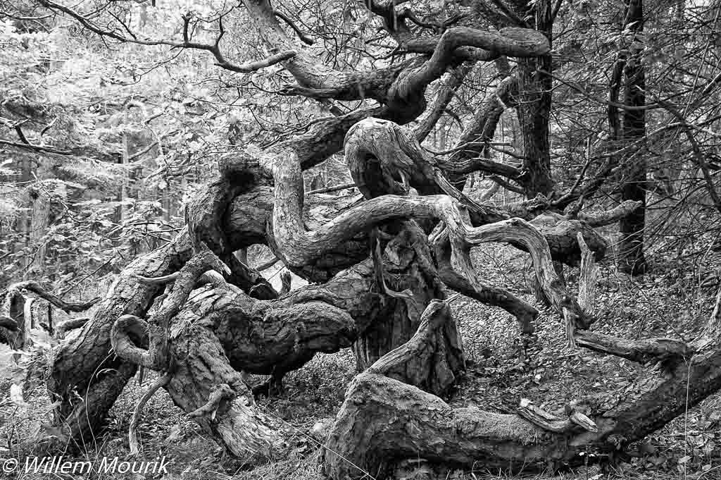 De drie gedaantes van de grove den