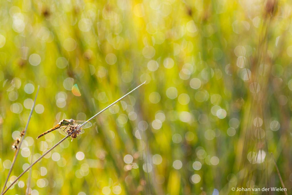 Nieuw thema fotobespreking: insecten en kriebelbeestjes