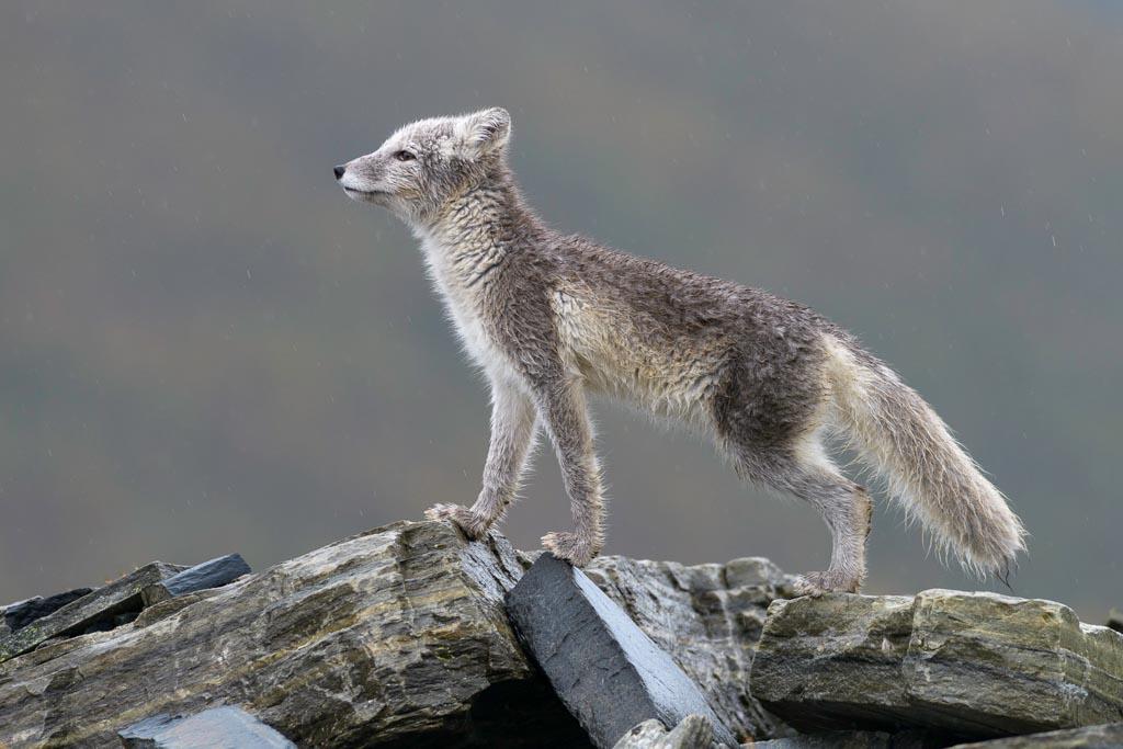 Vereniging van Natuurfotografen Friesland