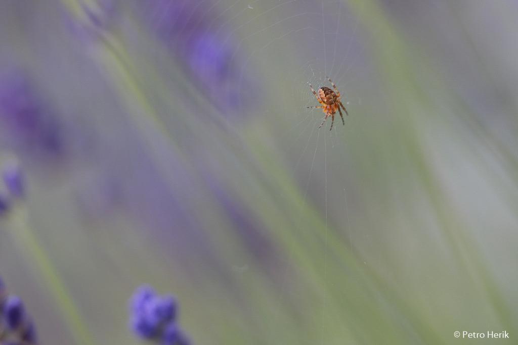 Fotobespreking thema 'insecten en kriebelbeestjes': Petro en Luce