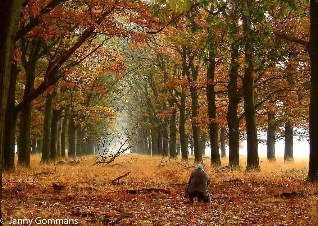 Gebieden fotograferen Natuurfotografie.nl:Nationaal Park De Hoge Veluwe