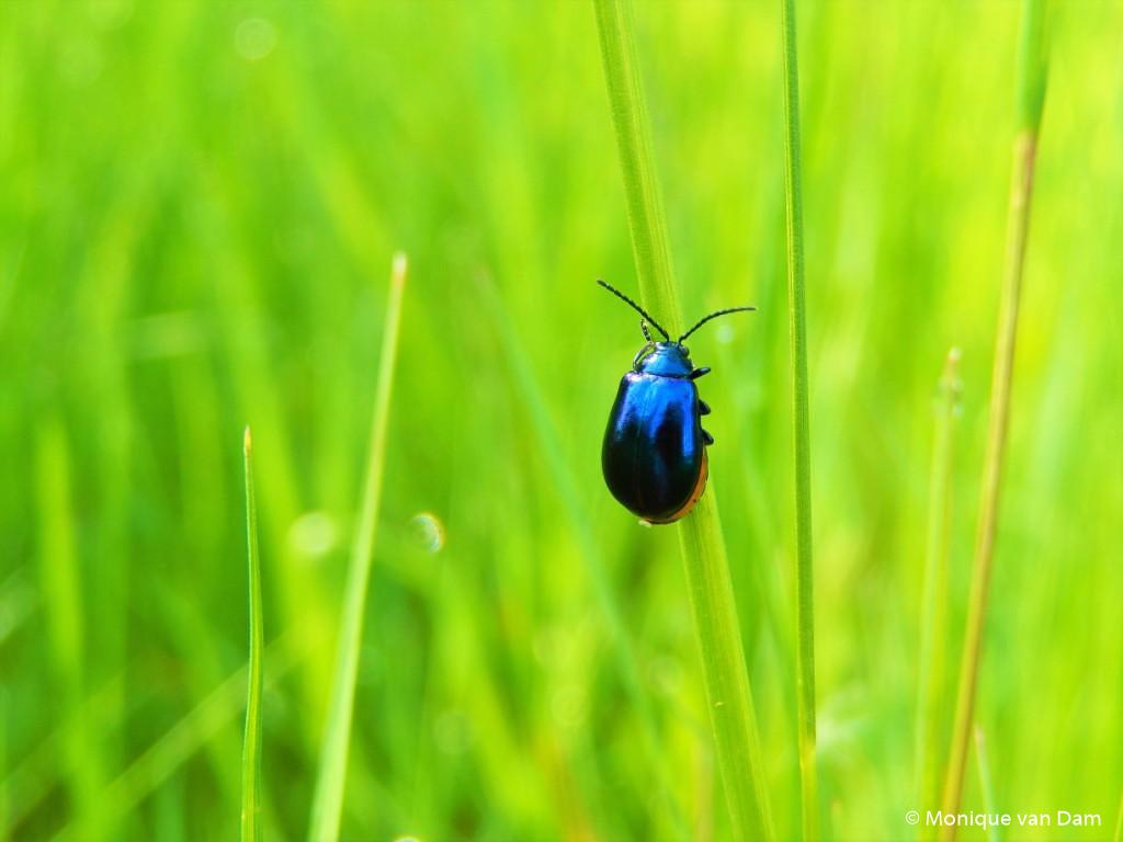 Fotobespreking thema 'insecten en kriebelbeestjes': Monique en Bas