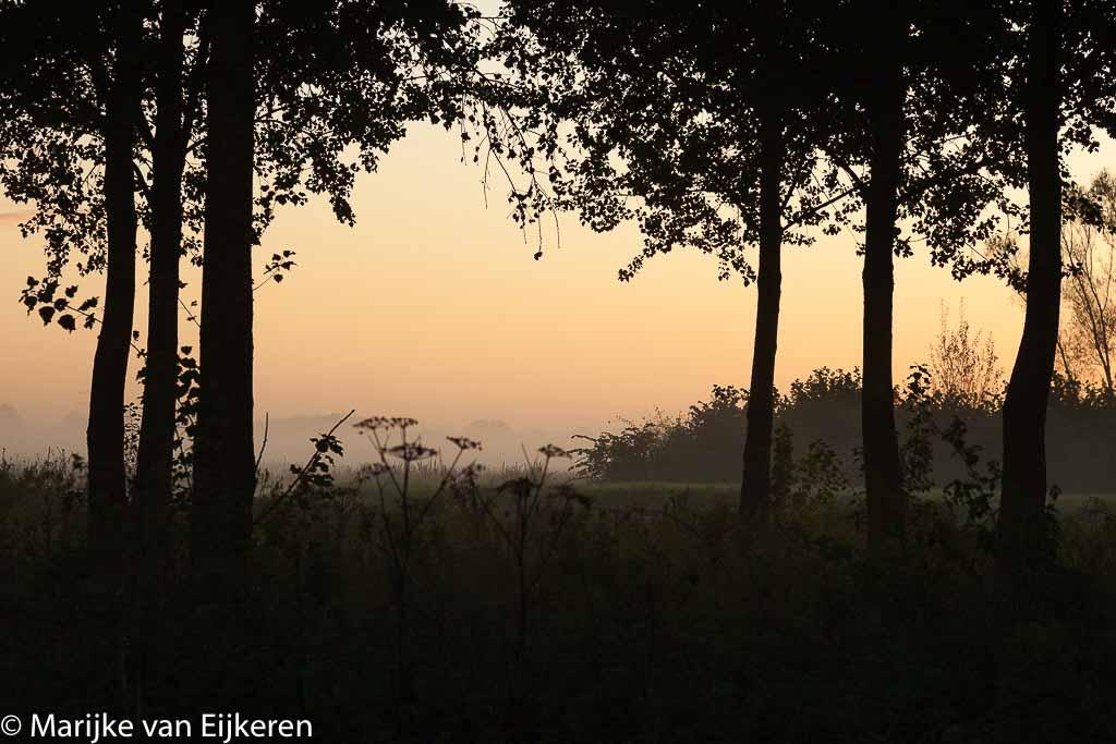 Gebieden fotograferen Natuurfotografie.nl:Nieuw Wulven