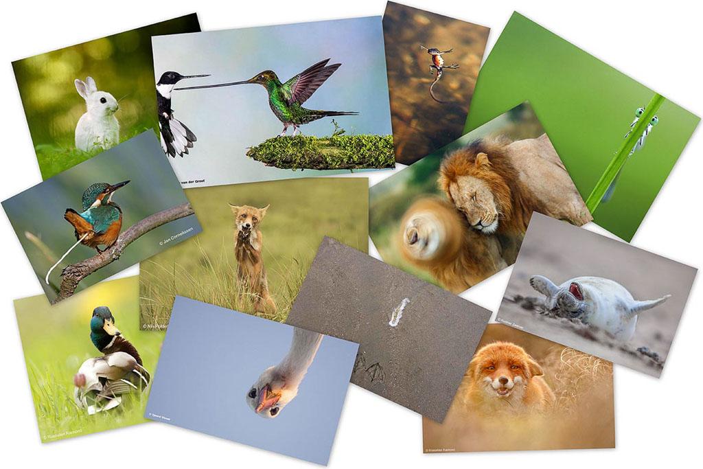 Humor en natuurfotografie