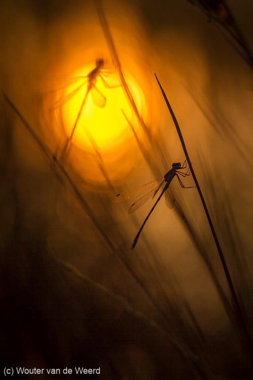 Twee juffers bij zonsopkomst