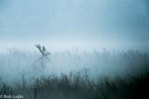 Even na zonsondergang kwam de mist opzetten. Een goed statief is dan onontbeerlijk.
