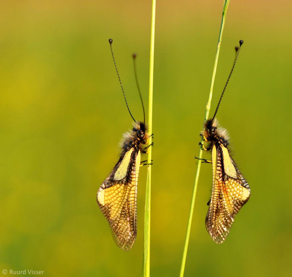 Beesten die je waarschijnlijk nog nooit hebt gezien