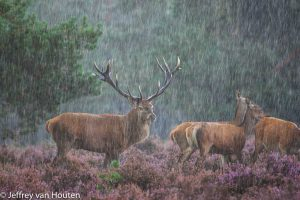 Het weer is een belangrijk element van je foto en hevige regen kan een prachtige toevoeging zijn. - Fotograaf: Jeffrey van Houten