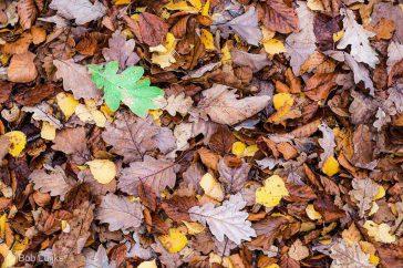 Bob_Luijks-herfst_kleurcontrast