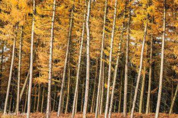 Bob_Luijks-herfst_voorbereiding