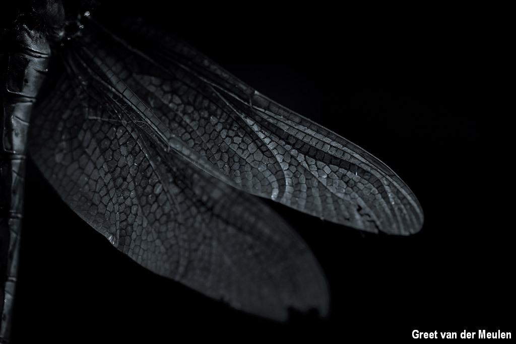 Vleugels van een vroege glazenmaker
