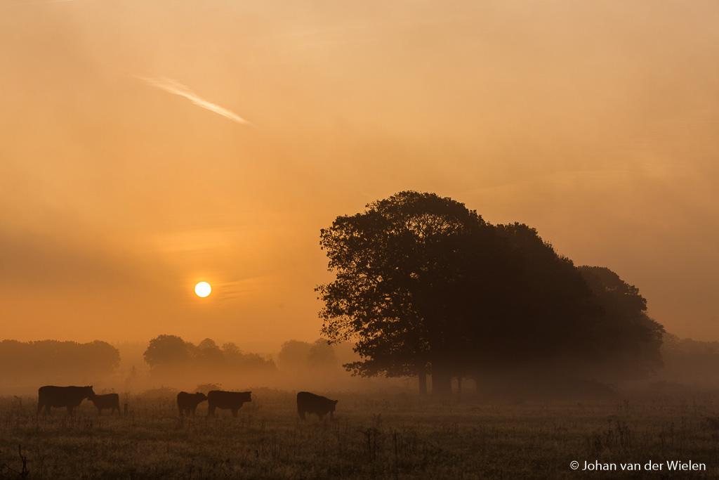 Gouden tips voor fijne sfeer in natuurfotografie