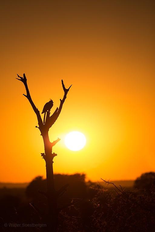Vale Toerako silhouet bij zonsopkomst