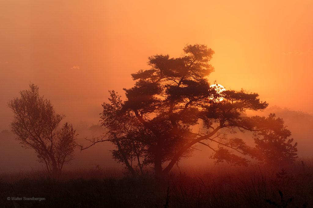 Mist Leersumse veld