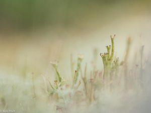 Van laag standpunt door de vegetatie heen fotograferen geeft een mystiek beeld. - Fotograaf: Ron Poot