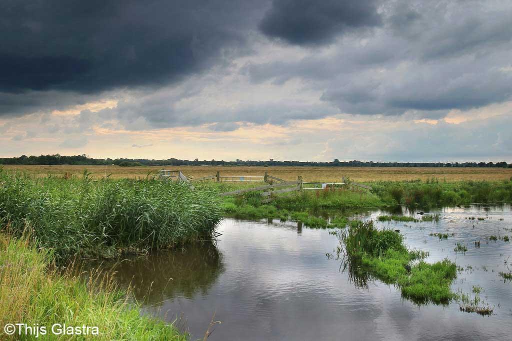 Gebieden fotograferen Natuurfotografie.nl:Zuidlaardermeer