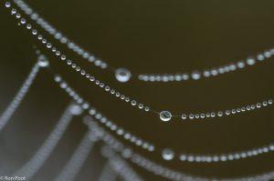 Een druppel op een spinnenweb is een mooi macro onderwerp. - Fotograaf: Ron Poot