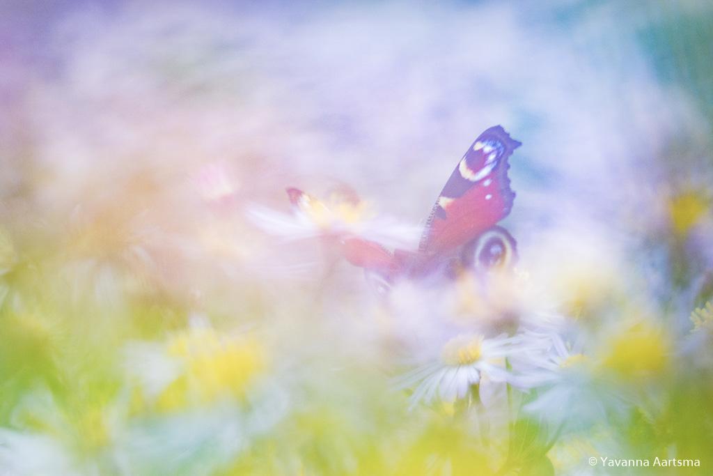 Fotobespreking thema 'dromen en romantiek': Yavanna en Marij